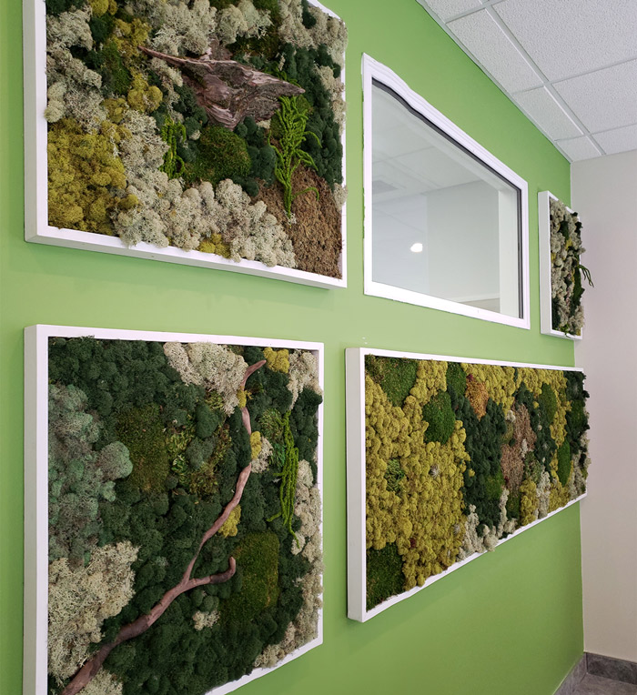 moss wall at devon dentist and clinic photos